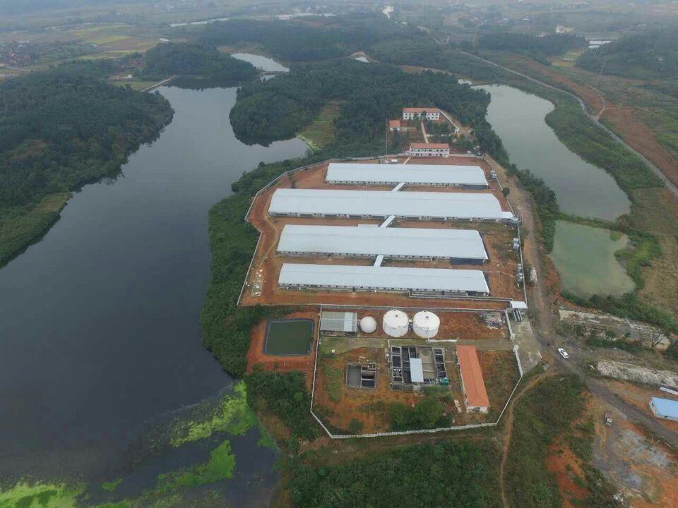 2400种猪场全景照